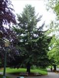Image for Pseudotsuga menziesii  -- University of Oregon