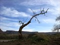 Image for Shoe Tree in Virgin, Utah USA
