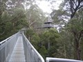 Image for Otway Fly tree canopy walk - Otway Ranges, Victoria