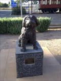 Image for Bob the railway dog Peterborough, South Australia