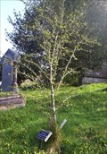 Image for Nellie Baker's Tree, Mary Tavy Churchyard, Devon UK