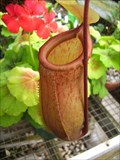 Image for Pitcher Plants & more - UNC Charlotte McMillan Greenhouse