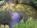 Image for Waipa Spring. Rotorua. New Zealand.