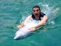 Image for Ride on a real dolphin