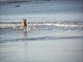 Image for Dog Beach - Anglesea, Victoria, Australia