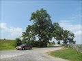 Image for Sickle's Witness Tree at Trostle Farm, Gettysburg Battlefield - Gettysburg, PA