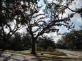 Image for Donald Bradburn - City Park - New Orleans, LA