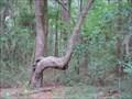 Image for Native American Directional Tree - Kingsland, Ga.