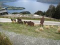 Image for Shepherd and Sheep - Queenstown, New Zealand