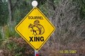 Image for Squirrel Crossing
