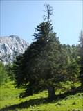 Image for Urtanne vom Steinberg - Kufstein, Tirol, Austria