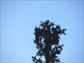 Image for Westmoor High School Tree - Daly City, CA