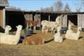 Image for KeLe Alpaca Farm – rural Kewaunee, WI