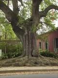 Image for Jim Bowie Live Oak