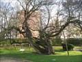 Image for L'arbre de Judée - l'Haÿ-les-Roses , France