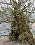 Image for The Old Oak Tree, Pontfadog, Ceiriog Valley, Wrexham, Wales