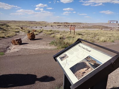 Crystal Forest - Petrified Forest National Park, Arizona