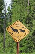 Image for Moose X-ing - Riondel, British Columbia