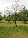 Image for Vietnam War Memorial, Memorial Grove, Sylvania, OH, USA
