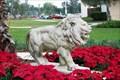 Image for St. Leo's Lion