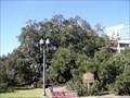 Image for Treaty Oak - Jacksonville, FL