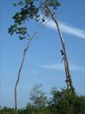 Image for Shoe Tree Trio - Ocala National Forest - Ocala, FL