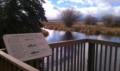 Viewing platform along Crooked Creek to view the wild trout and to feed them.
