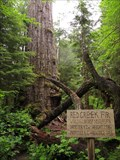 Image for Red Creek Fir