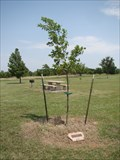 Image for Jane Hunter Young tree - Mitch Park - Edmond, OK