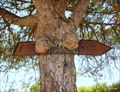 Image for Hungry Pine tree, Barroca, Santarém, Portugal