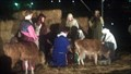 Image for Live Nativity Reenactment - St. Francis University, Ft. Wayne, IN
