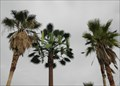 Image for Palm Tree Cell Tower -  Palm Springs CA