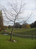 Image for Raymond Hill - Campbell Park, Milton Keynes, Buckinghamshire.