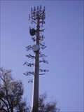 Image for Mandeville's Disguised Cell Tower #2
