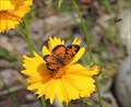 Image for Kootenay Gallery Butterfly Garden - Castlegar, British Columbia