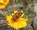 Image for Kootenay Gallery Butterfly Garden - Castlegar, British Columbia
