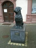 Image for Rottweiler Dog, Rottweil, Germany, BW