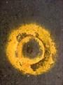 Image for State Surveymark 89107, Tarrawanna, NSW, Australia