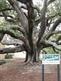 Image for Friendship Oak - Long Beach, MS