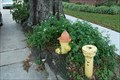 Image for Fire Hydrant Eating Oak Tree - Gretna, LA