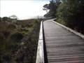 Image for Te Puru - Omana Boardwalk - North Island, New Zealand