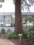 Image for Capitol Park Moon Tree - Sacramento, CA