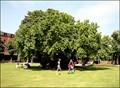 Image for Shakespeare's Mulberry Tree, Stratford upon Avon, Warwickshire, UK