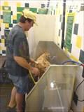 Image for Paws-O-Mat - Pet Supplies Plus - Pinellas Park, FL