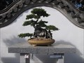 Image for Bonsai 105 ans, Montreal, Qc