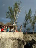 Image for Diving Tree, Rick´s Café - Negril, Jamaica