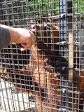 Image for Feed the Bears - Wildwood Wildlife Park - Minocqua, WI