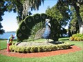 Image for Peacock - Cypress Gardens, FL