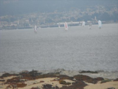 spinnakers flying in the bay