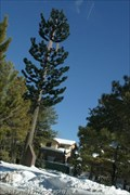 Image for Cell Tower Pine - Flagstaff, AZ